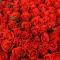 Букет из 151 розы Эль Торо  - Фото 5