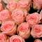 Букет из 51 розы Софи Лорен - Фото 4