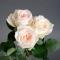 Роза Вайт Охара  - Фото 7
