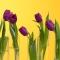Тюльпан фиолетовый - Фото 3