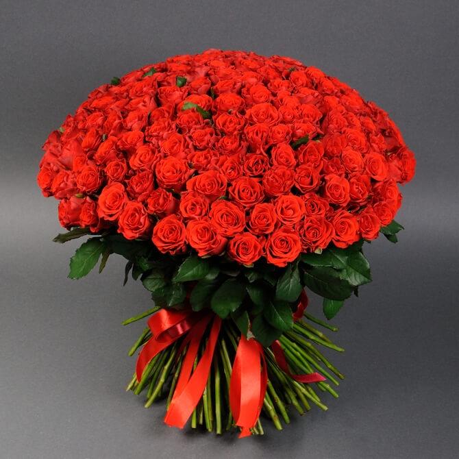 Букет із 151 троянди Ель Торо - купити за найкращими цінами в ...