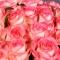 Букет из 101 розы Джумилия - Фото 6