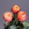 Роза Кахала - Фото 4