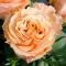 Букет из 15 роз Шиммер - Фото 5