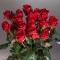 19 роз Маричка - Фото 1