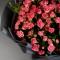Букет из 15 роз спрей Грация  - Фото 5