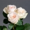 Роза Вайт Охара  - Фото 5