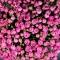 Коробка люкс с розой Мисти Бабблз - Фото 6