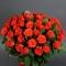 Букет из 51 розы Эль Торо  - Фото 4