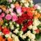 Букет микс из 55 роз спрей - Фото 3