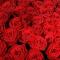 Букет из 151 розы Маричка  - Фото 4