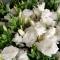 Букет 35 белых эустом - Фото 4