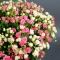 Букет из 55 роз спрей  - Фото 5