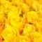 Букет из 141 розы Пенни Лейн  - Фото 5