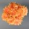 Букет хризантем Солнечный свет - Фото 5