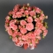 Розы Пинк Ванесса в розовой шляпной коробке - Фото 4