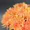 Букет хризантем Солнечный свет - Фото 4