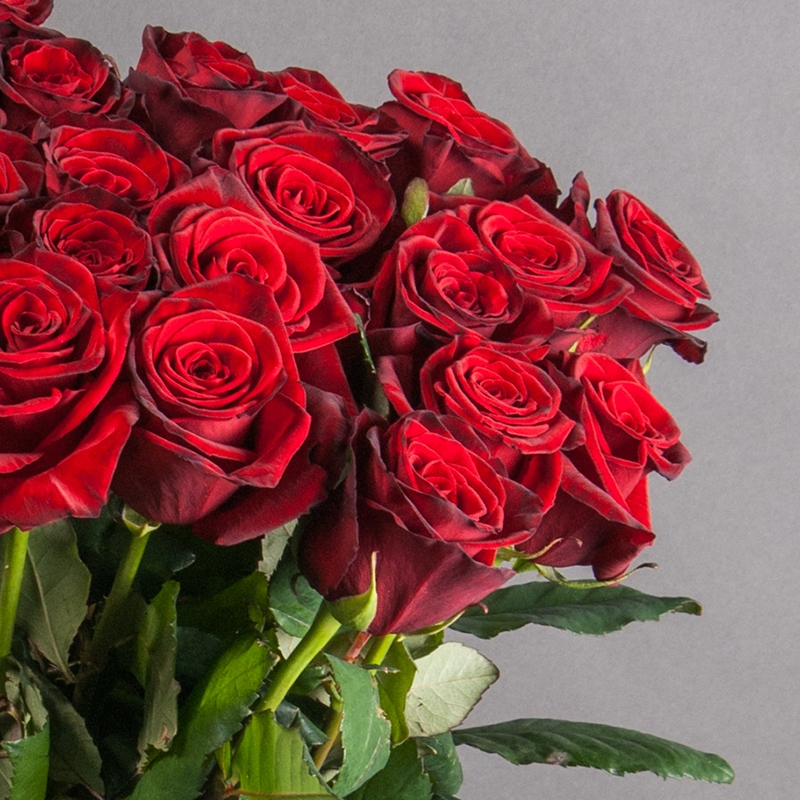 Букет из 19 роз Гран При - доставка цветов в Киеве | Камелия