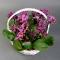 Орхидея Фаленопсис мини в корзинке - Фото 3