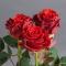 Роза Эль Торо - Фото 4