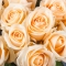 Букет из 35 роз Пич Аваланч - Фото 5