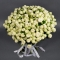 Букет из 51 розы спрей Сноу Ворлд - Фото 2